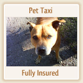 Pet Taxi - Fully Insured